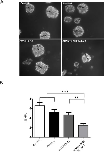 Simultaneous production of fibulin-2 and ADAMTS-12 reduces self-renewal of mammosphere-forming units in MCF-7 cells.