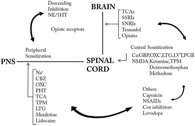 Mechanistic approaches of treatment in neuropathic pain.