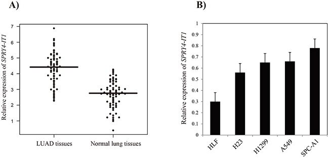 The relative expression levels of SPRY4-IT1 in LUAD tissues and cell lines.