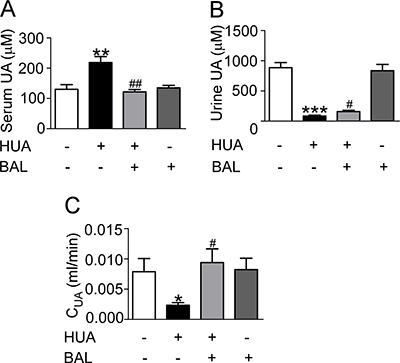 Baicalein reduced UA level of hyperuricemia mice in vivo.