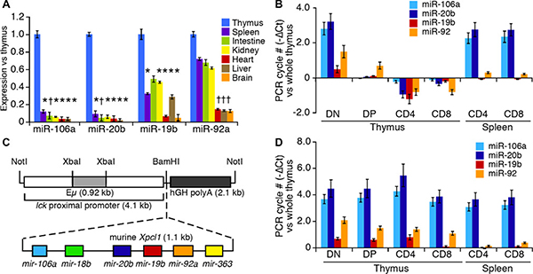 miR-106a~363 expression in wild type and Lx transgenic mice.
