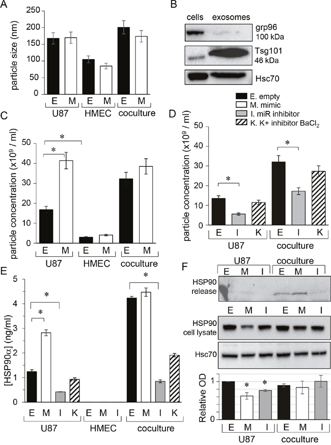 miR-5096 increases the release of exosomes from glioblastoma cells.