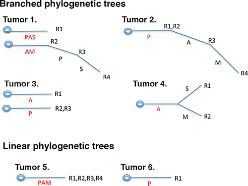 Branched or linear fashions of protein losses in ccRCC tumors.