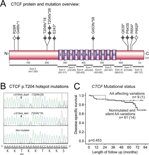CTCF mutations, p.T204 hotspot site and association with disease-specific survival in primary endometrial carcinomas.