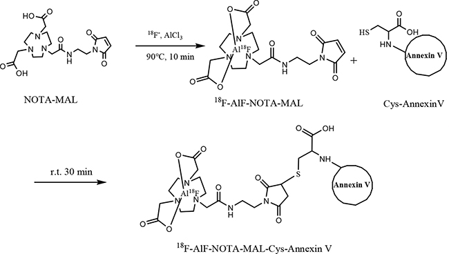 Scheme 1: Synthesis of 18F-AlF-NOTA-MAL-Cys-Annexin V.