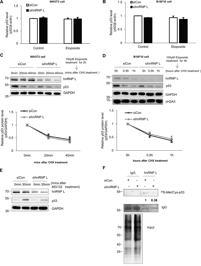 hnRNP L controls the expression of p53 through translational regulation.