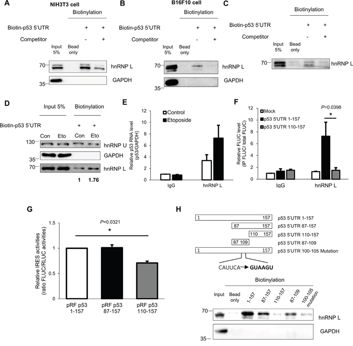 hnRNP L interacts with p53 mRNA and the binding apparently increases after DNA damage.