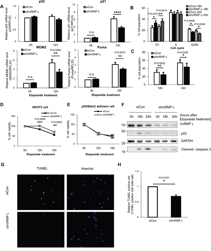 Reduction of hnRNP L downregulates p53 expression and relieves cell cycle arrest and DNA damage-induced apoptosis of NIH3T3 cells.