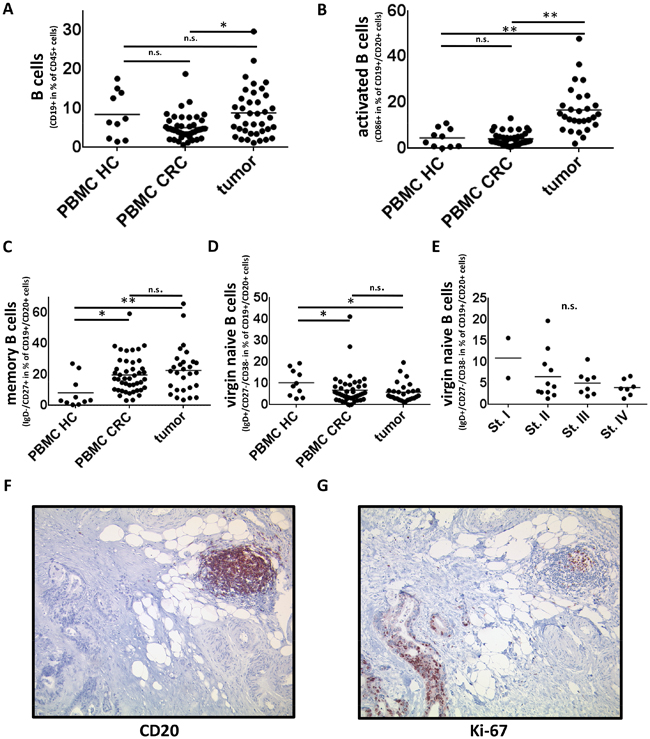 B cells and B-cell subsets in PBMC and tumor samples of CRC patients and PBMC of healthy controls.