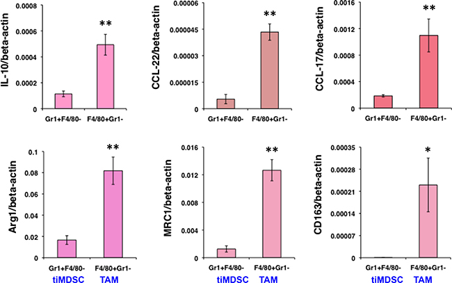 TiMDSC expresses lower levels of anti-inflammatory factors compared to those of TAM in MCaP0008 breast cancers.