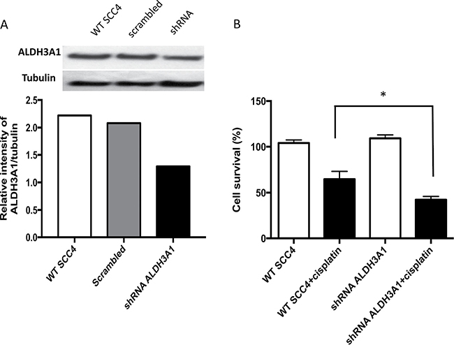Knockdown of ALDH3A1 expression in HNSCC cells increases sensitivity to cisplatin.