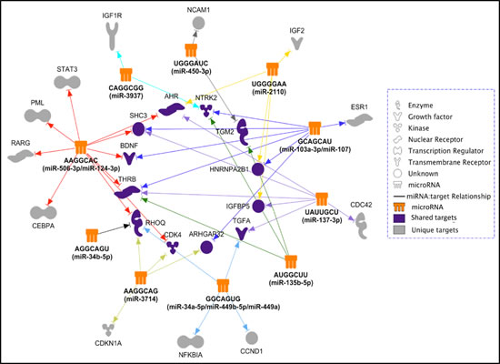 The predicted differentiation-inducing targetome network for the identified 14 differentiation-inducing miRNAs.