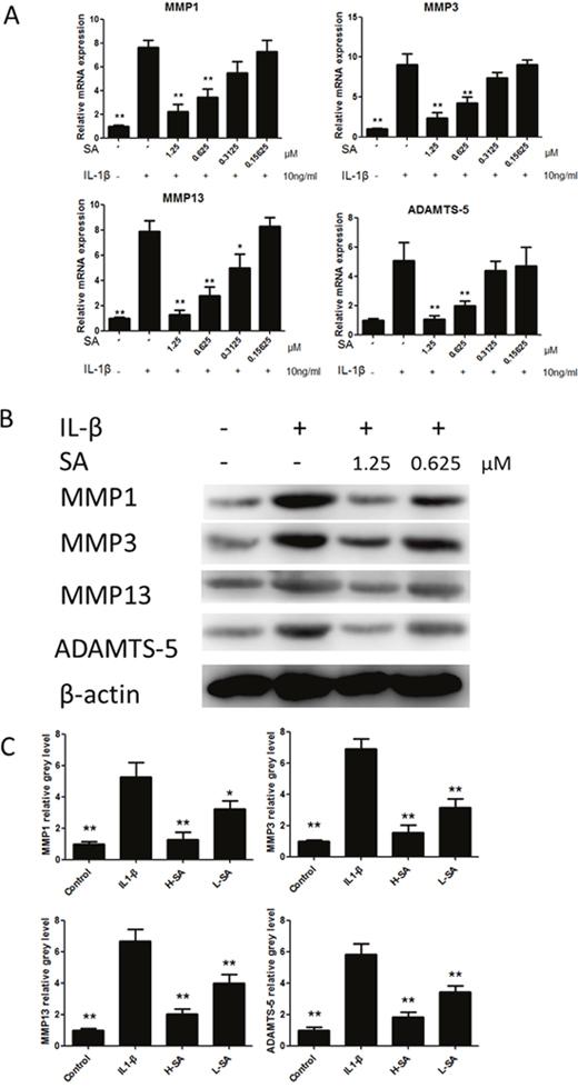 Sanguinarine (SA) inhibited interleukin (IL)-1β-induced matrix metalloproteinase-1 (MMP1), MMP3, MMP13, and A disintegrin and metalloproteinase with thrombospondin motifs (ADAMTS)-5 expression in chondrocytes.