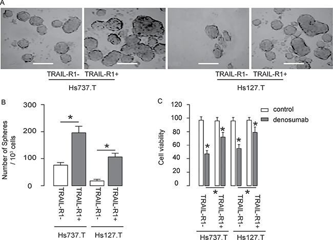 TRAIL-R1+ GCT cells generate more tumor spheres and are more chemo-resistant in vitro.