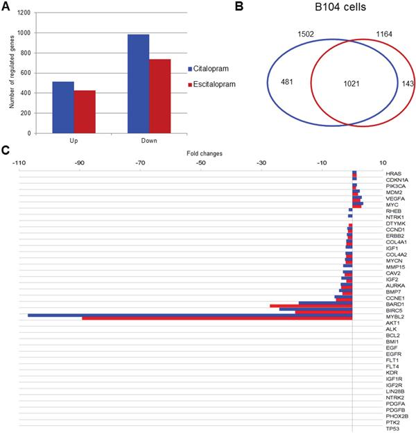 Modulation of gene expression by citalopram or escitalopram in B104 cells, Venn diagram, neuroblastoma prognostic marker gene expression.