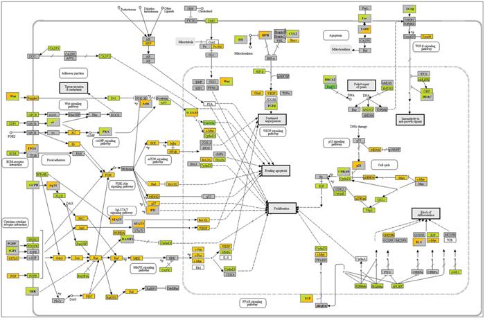 KEGG pathways in cancer.