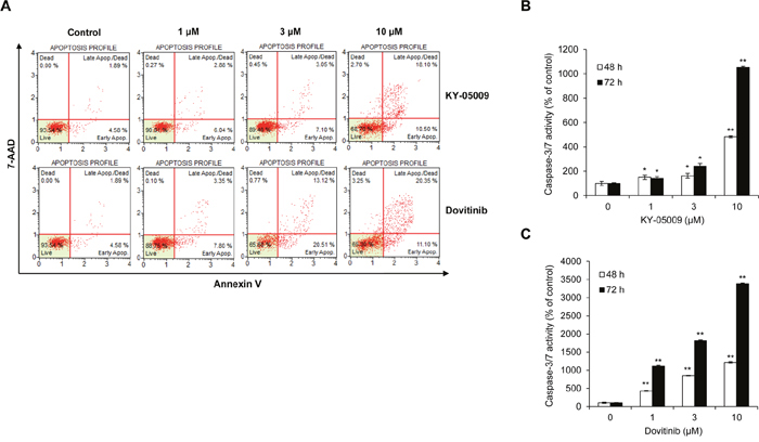 KY-05009 and dovitinib induce apoptosis of MM cells.