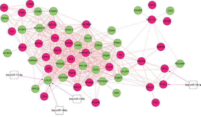 miRNA-targeted co-expression network.