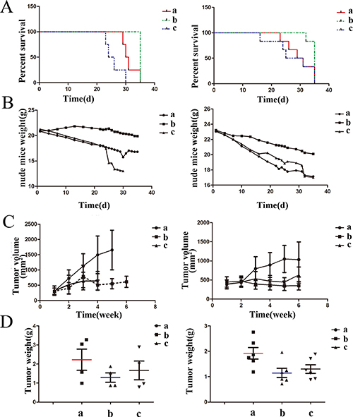 The effects of drugs on mice in survival time, mice weight and tumor inhibition.