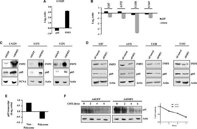 Mechanism of p65 expression regulation by IMP3.