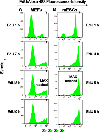 EdU-coupled fluorescence intensity analysis in non-transformed mouse cells.