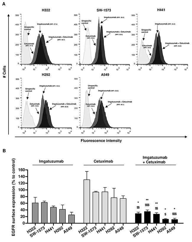 Effect of anti-EGFR monoclonal antibody treatment on EGFR surface expression levels.