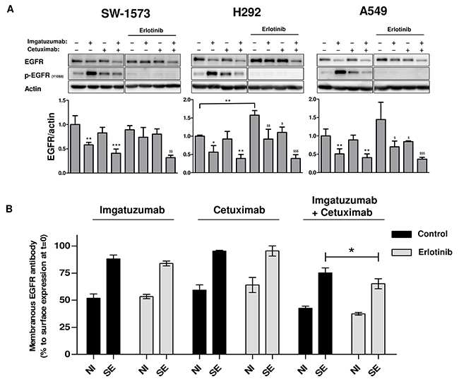 Effects of TKI treatment on monoclonal antibody-induced internalization and degradation.