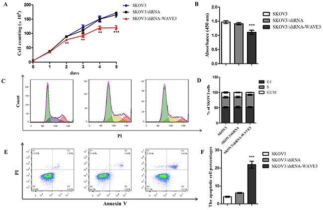 Effect of WAVE3 on the growth, cell cycle distribution and apoptosis of SKOV3 cells.