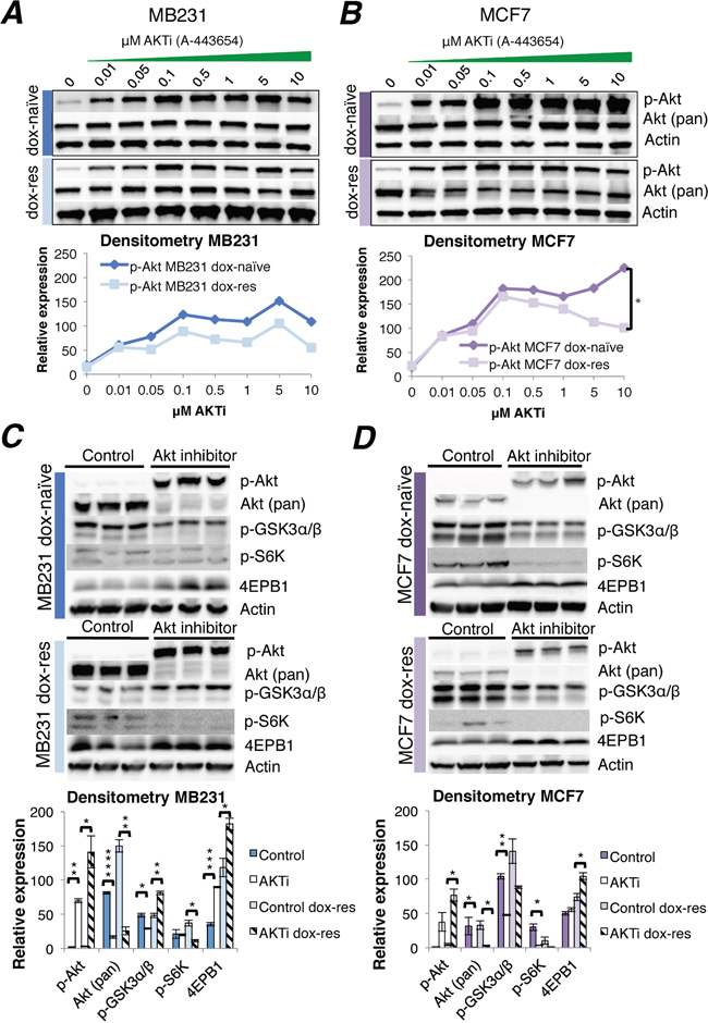 Akt inhibitor treatment of doxorubicin-naïve and doxorubicin-resistant human breast cancer cell lines.