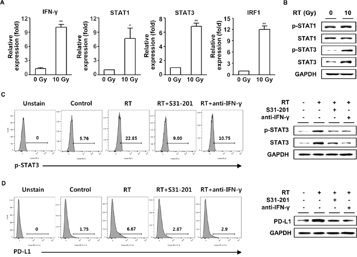 Upregulation of PD-L1 expression in tumor cells following radiation was IFN-γ-dependent.