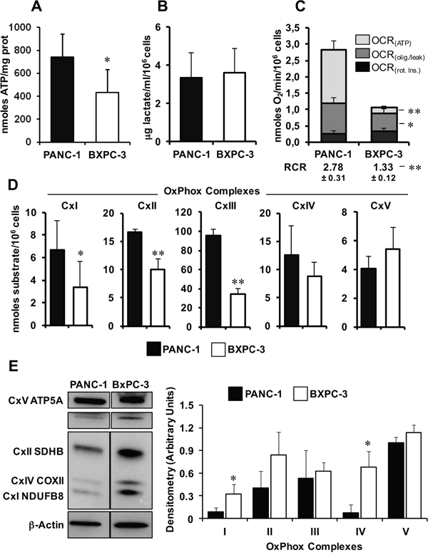 Comparative analysis of the metabolic profiles of PANC-1 and BXPC-3 cell lines.