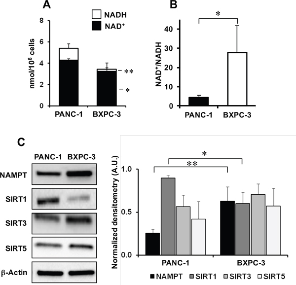 NAD metabolism in PANC-1 and BXPC-3 cell lines.