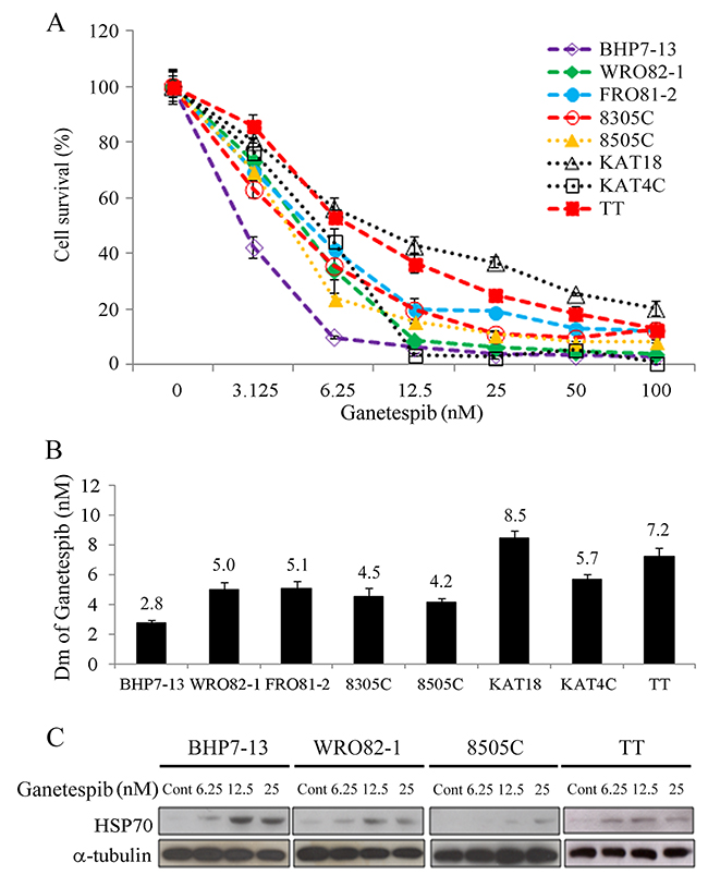 Ganetespib induces cytotoxicity and increases HSP70 expression in thyroid cancer cells.