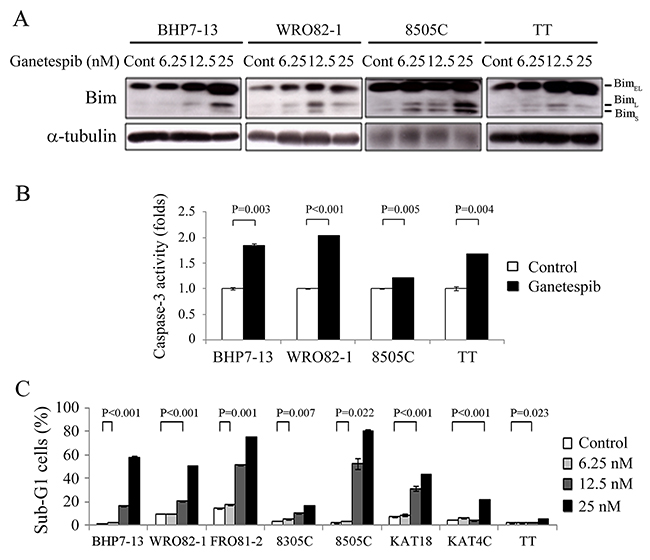 Ganetespib increases Bim expression, activates caspase-3 activity and induces apoptosis.