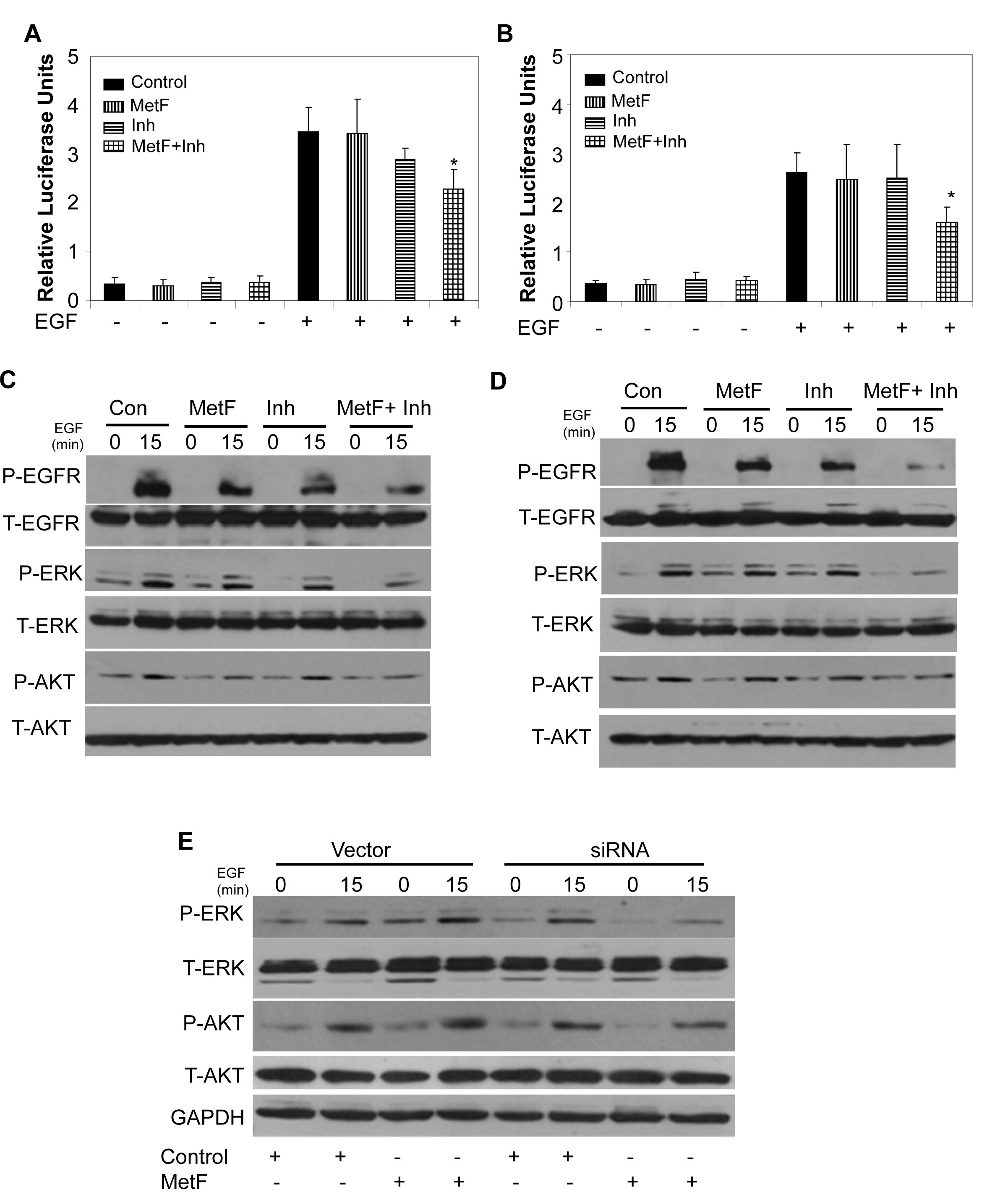 FAAH inhibition enhances Met-F-AEA mediated inhibition of EGFR signaling in NSCLC cell lines.