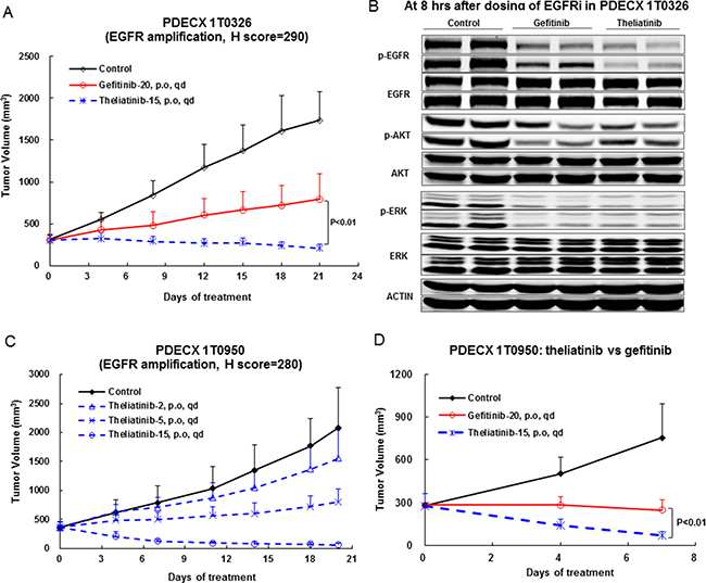 Anti-tumor efficacy of theliatinib in PDECX models with EGFR gene amplification and overexpression.