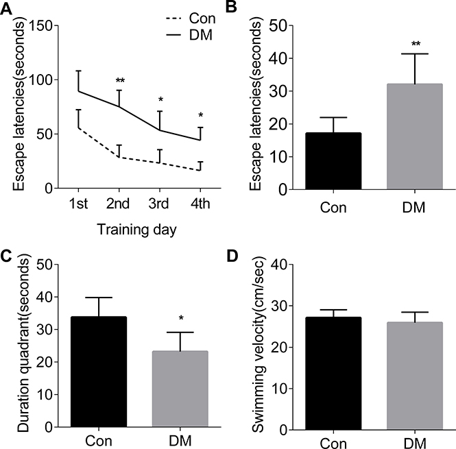The spatial learning and memory deficits in diabetic rats.