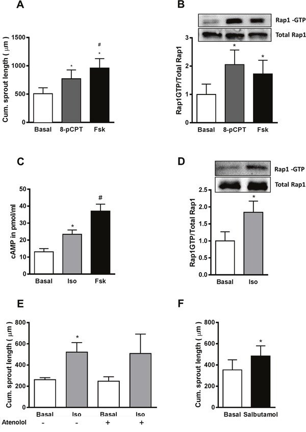 Activation of β2AR increases sprouting angiogenesis by cAMP-dependent activation of Epac1.