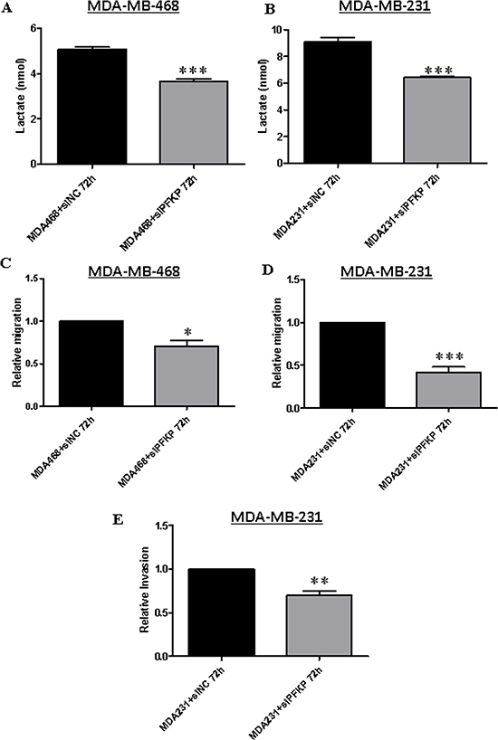 PFKP knockdown inhibits lactate production and impairs breast cancer cell migration and invasion.