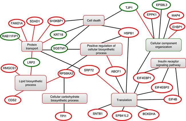 Functional clustering of the differentially modulated phosphoproteins identified by phosphoproteomics.
