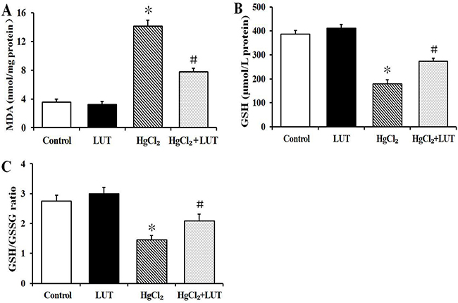 Effects of luteolin given to rats prior to HgCl2 administration on concentration of MDA and GSH in liver tissue.