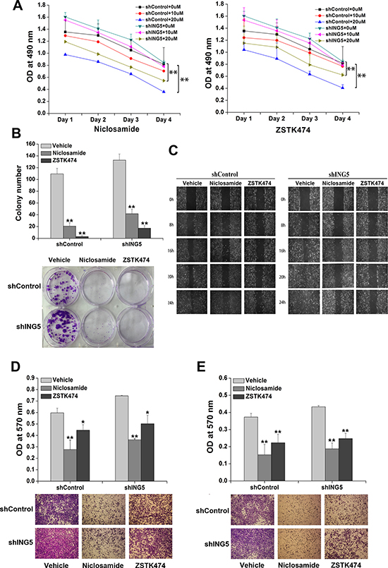 Inhibition of STAT3 or PI3K/Akt pathway reverses ING5 knockdown-promoted cancer aggressiveness.