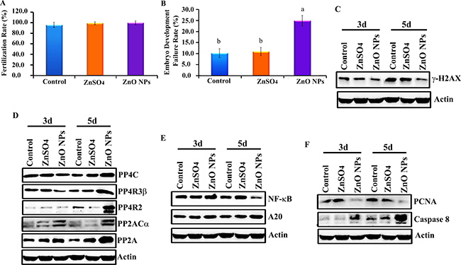 Inhibition of chicken embryonic development by ZnO NPs.