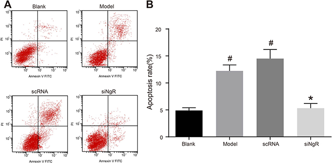 NgR gene silencing significantly inhibits apoptosis of NMDA-treated mRGCs.