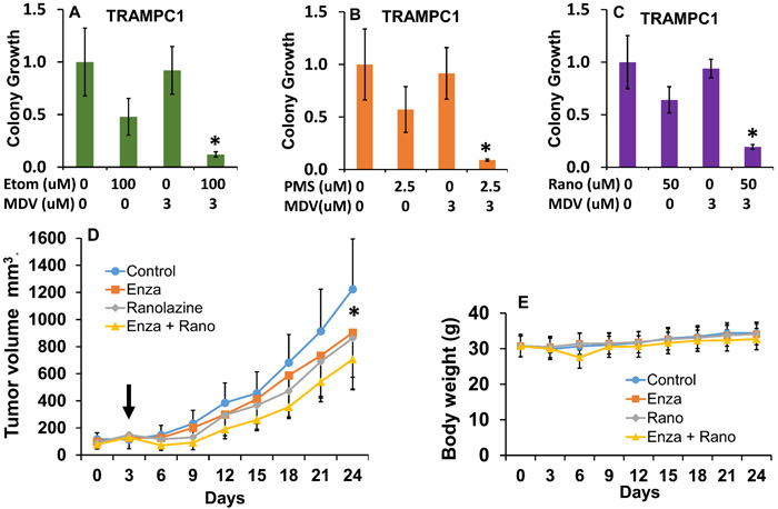 Combinatorial effects of beta-oxidation inhibition and anti-androgen therapy in mouse TRAMPC1 cells and human 22Rv1 xenografts.
