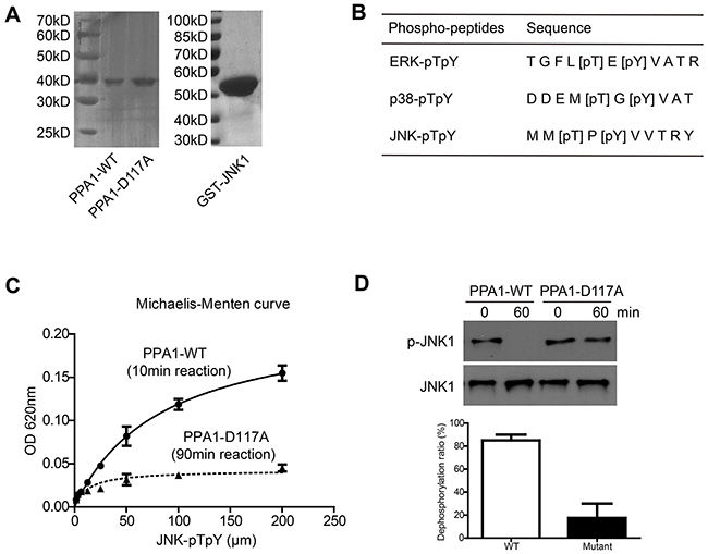 Purification and enzymatic characterization of PPA1.