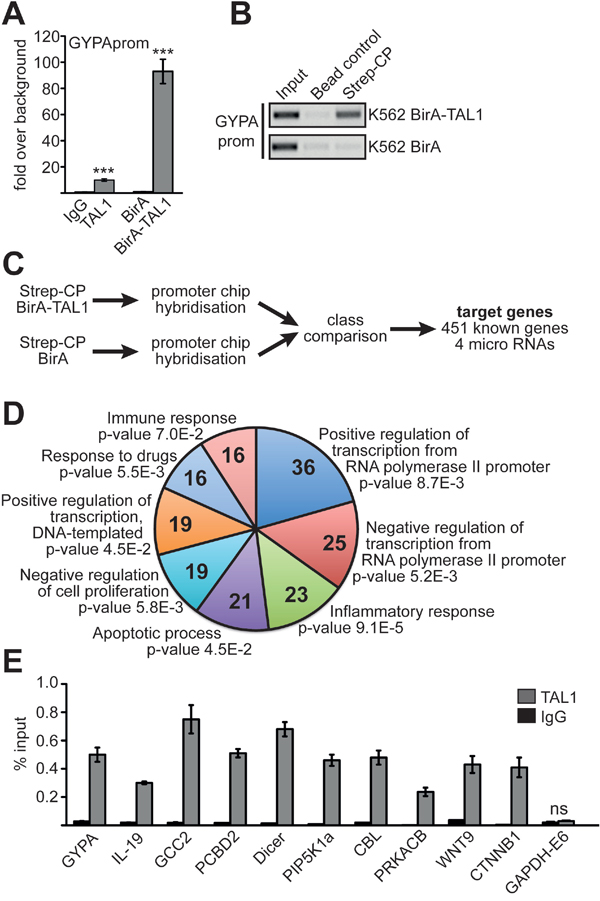 Identification of TAL1 target genes.