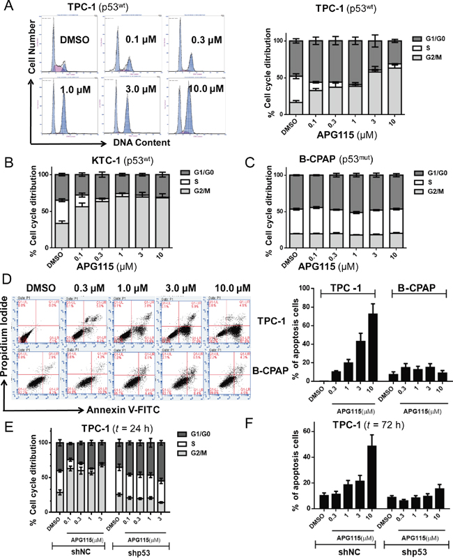 APG115 elicited cell cycle arrest and apoptosis in a p53-dependent manner in DePTC cells.