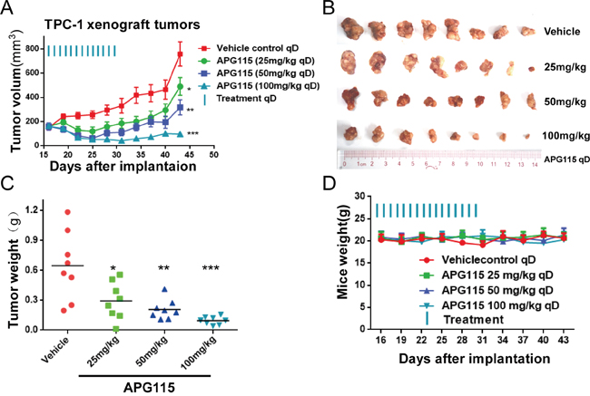APG115 induced tumor regression in a TPC-1 xenograft tumor model.