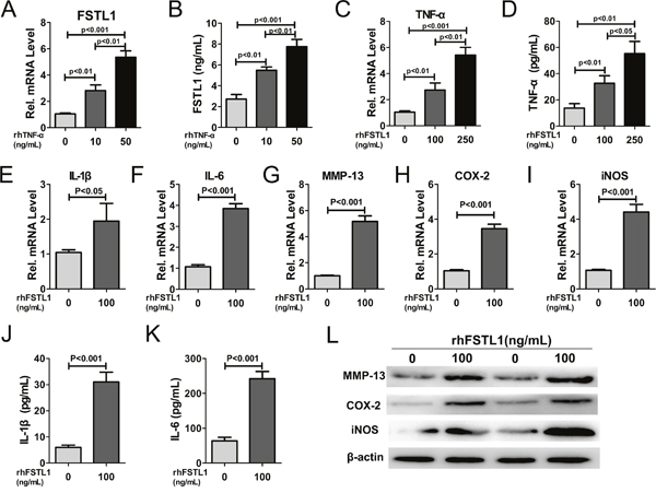 FSTL1 expression was stimulated by TNF-α and FSTL1 up-regulated the expression of TNF-α, IL-1β, IL-6, MMP-13, COX-2, and iNOS in human nucleus pulposus cells.